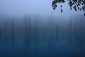 美瑛「青い池」