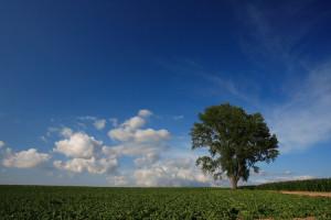 2008年の哲学の木