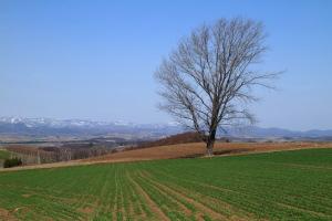 元気な頃の「哲学の木」
