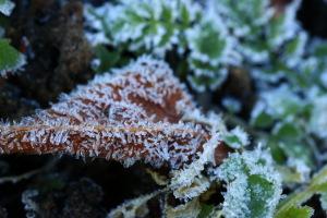 霜で真っ白