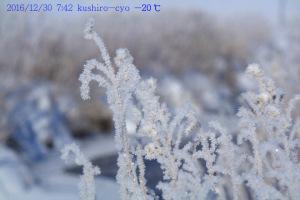 -20℃の世界