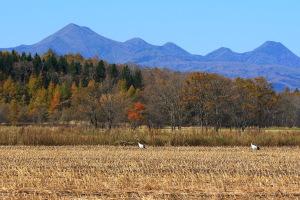 鶴の居る風景